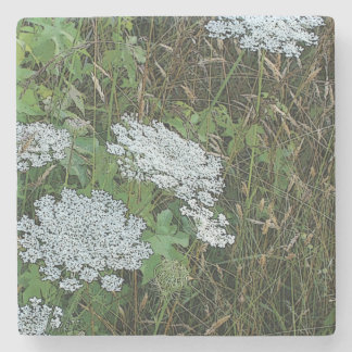 White Queen Anne's Lace Wild Flower Stone Coaster