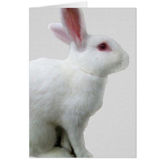 White Rabbit Card