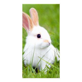 White Rabbit Photo Greeting Card