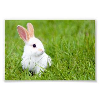 White Rabbit Photo Print