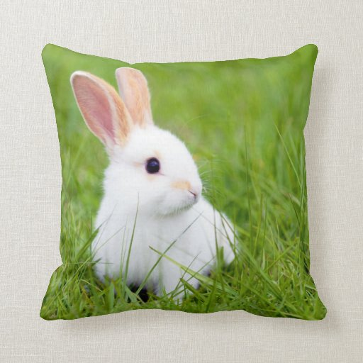 Decorative Pillows With Rabbits : White Rabbit Pillows Zazzle