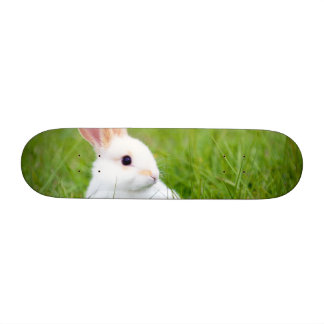 White Rabbit Skateboard Decks