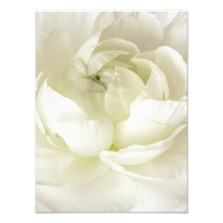 White Ranunculus High Key Flower Template Custom Photo Print
