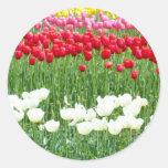 White, red & yellow tulips round sticker