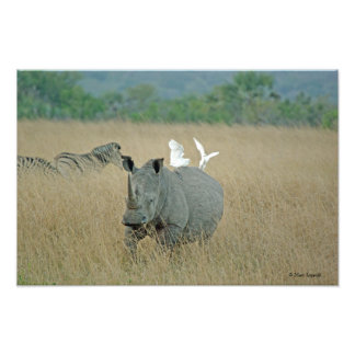 White Rhino 2 Art Photo