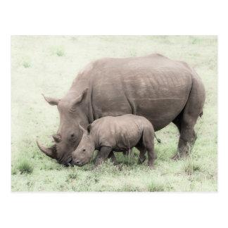 White Rhino & Baby Postcard