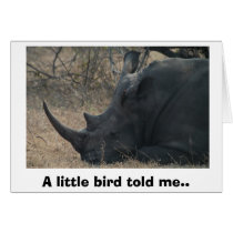 White Rhino gets Advice from a Little Bird, A l...