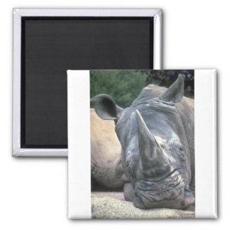 White Rhino Refrigerator Magnet