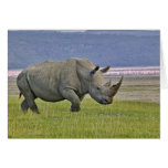White Rhinoceros and distant Lesser Flamingos, Card