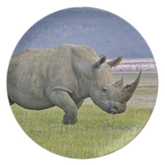 White Rhinoceros and distant Lesser Flamingos, Melamine Plate