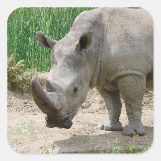 White Rhinoceros Ceratotherium Simum Square Sticker