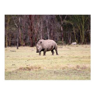 White Rhinoceros Postcard