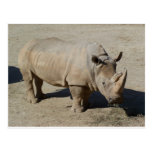 White Rhinoceros Rhino Full Body Postcard