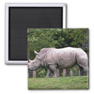 White Rhinos Magnet