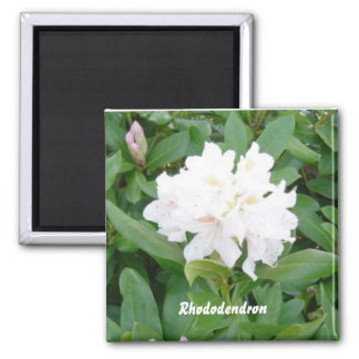 White Rhododendron magnet