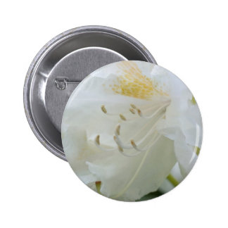 White Rhododendron Weisse Rhododendron Pins