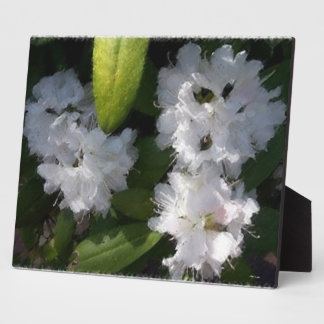 White Rhododenrons Bush Plaque