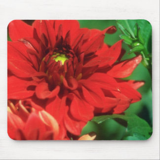 White Rich red flowers Mouse Pad
