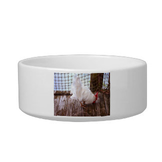 white rooster on dock eating cat water bowls