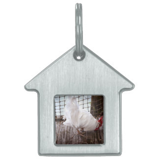white rooster on dock pet tag