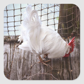 white rooster on dock square stickers