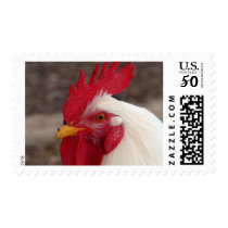 White Rooster Postage