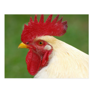White Rooster with Red Comb Postcard