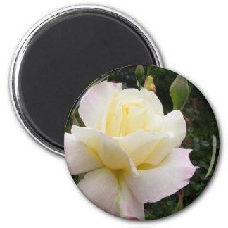 White Rose 001 Magnets