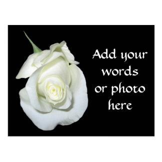 White Rose #1 Postcard