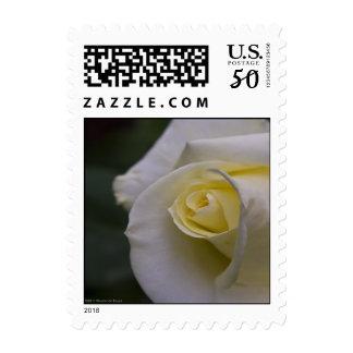 White Rose 2 Postage