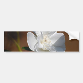 White Rose and meaning Bumper Sticker