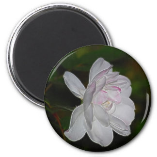 White Rose and meaning Magnet