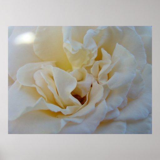 White Rose art prints Healing Touch Nursing Nurse Print