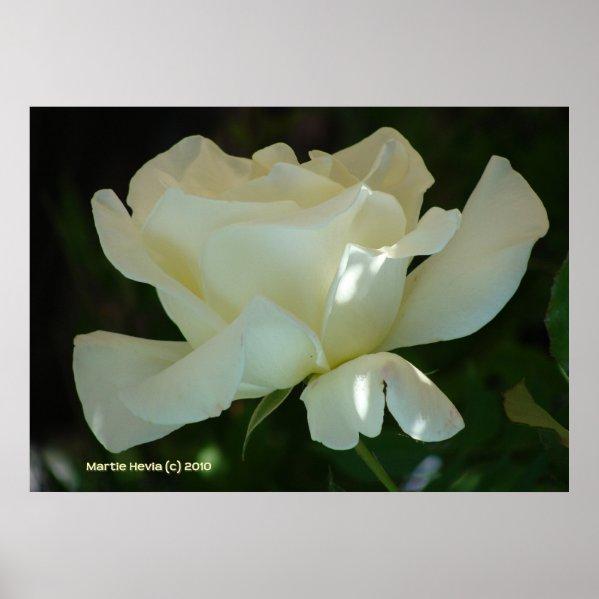 White Rose Ballerina print