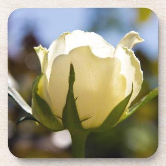 White Rose Beverage Coaster