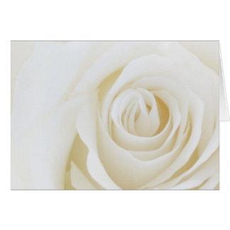White Rose Blank Card