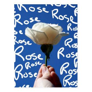 White rose, blue back, Rose written in white Postcard