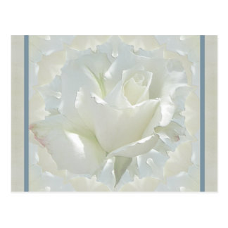 White Rose ~ Blue Border Postcard