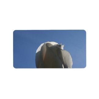 White rose bud backlit against blue sky address label