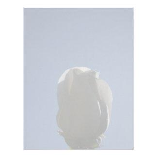 White rose bud backlit against blue sky letterhead