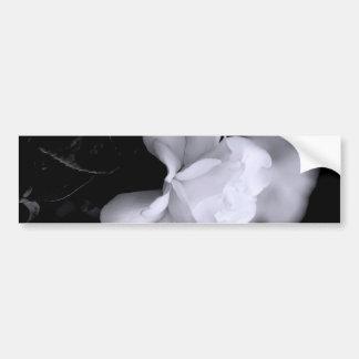 White Rose Car Bumper Sticker