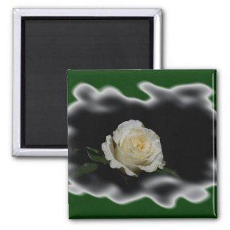 White Rose Burned Edges zazzle_magnet