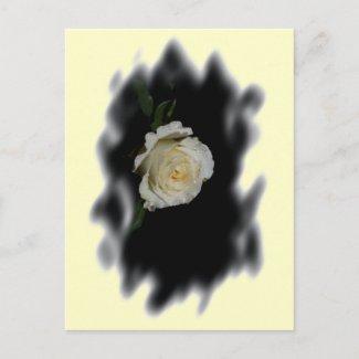 White Rose Burned Edges zazzle_postcard