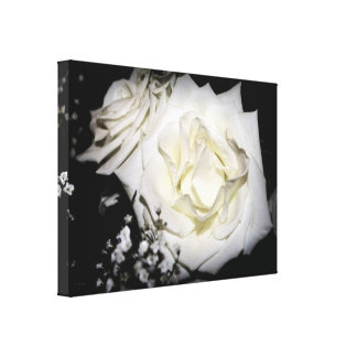 White Rose Canvas
