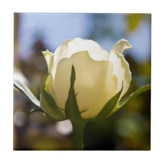 White Rose Ceramic Tile