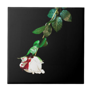 White rose covered with blood tile