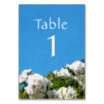 White rose floral table number