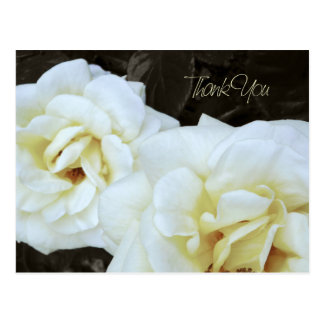 White Rose Flower | Thank You Postcards