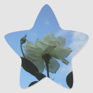 White Rose In The Blue Star Sticker