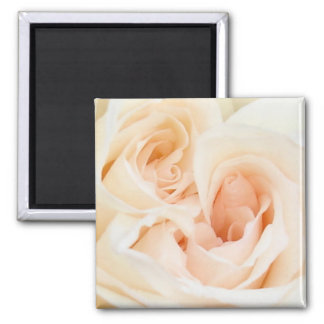 White Rose: Innocent and Pure Love 2 Inch Square Magnet